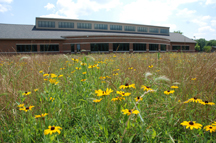 Yellow coneflowers in restored native prairie surrounding library