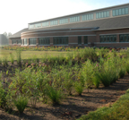 Rain gardens absorb roof runoff