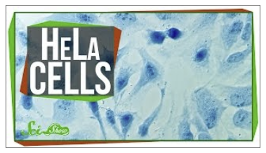 Title screen from video Hela Cells
