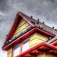 Yellow House with Pigeons by Mike Gates
