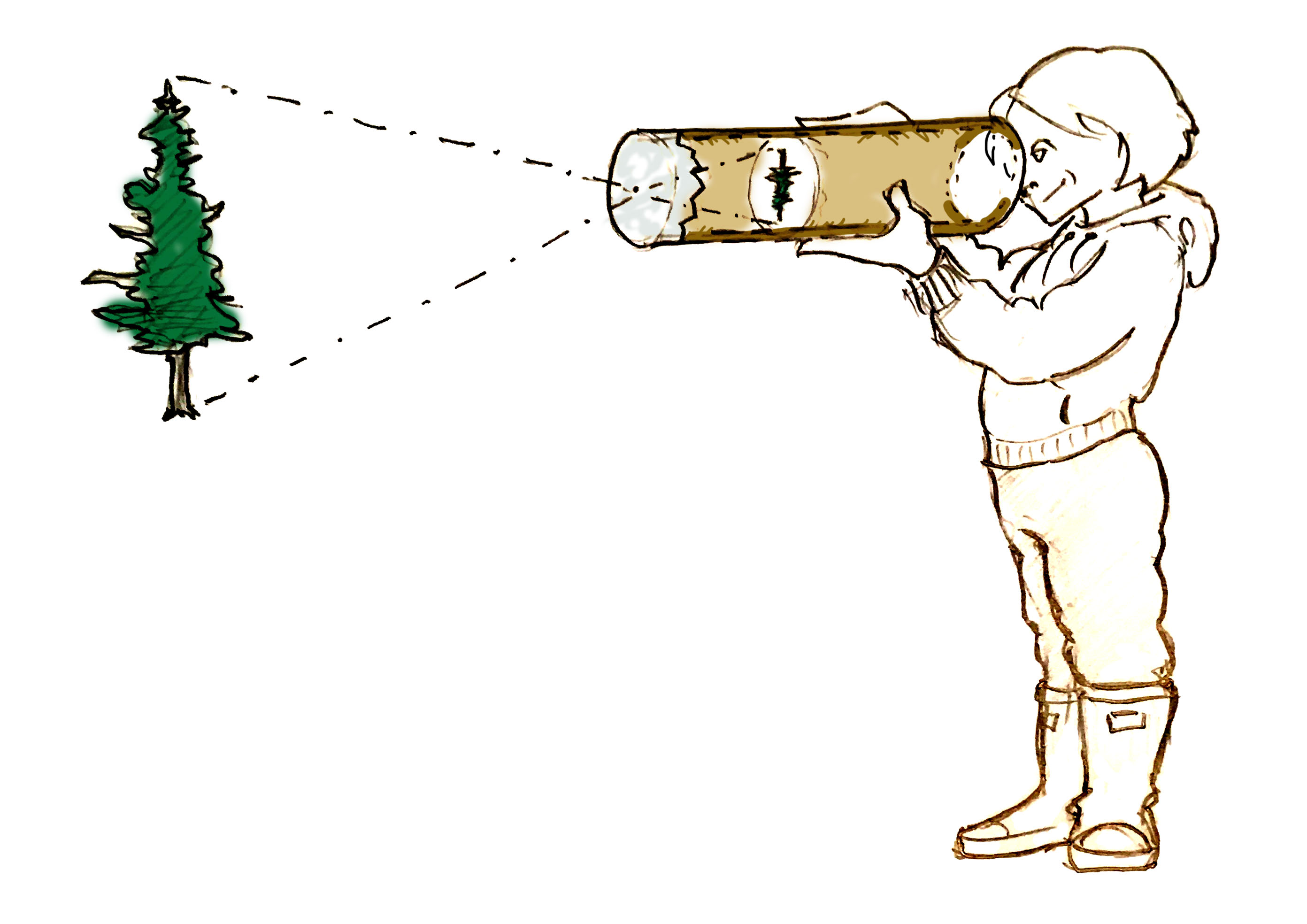 Illustration of a homemade camera obscura showing how a tree appears upside down.