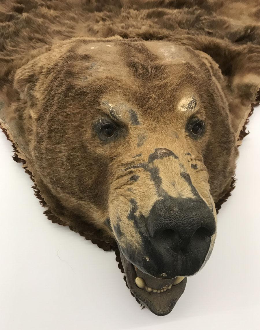 Abraded bear face.
