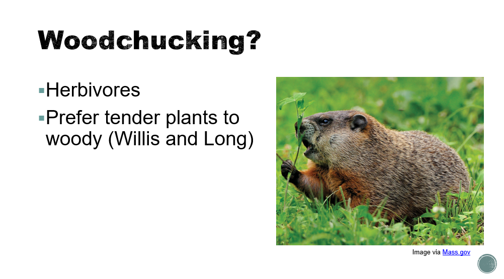 "Example slide about woodchucks chucking wood: the bullet point stating ""prefer tender plants to woody"" is attributed to (Willis and Long)"