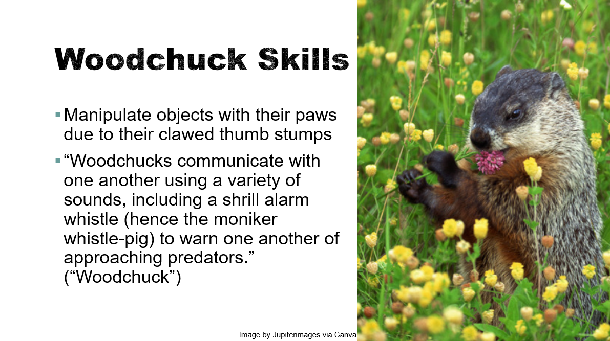 "Example slide with a direct quote in quotation marks, attributed to an article title (""Woodchuck"")"