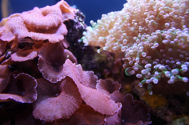 Two different types of coral and sea anenome.