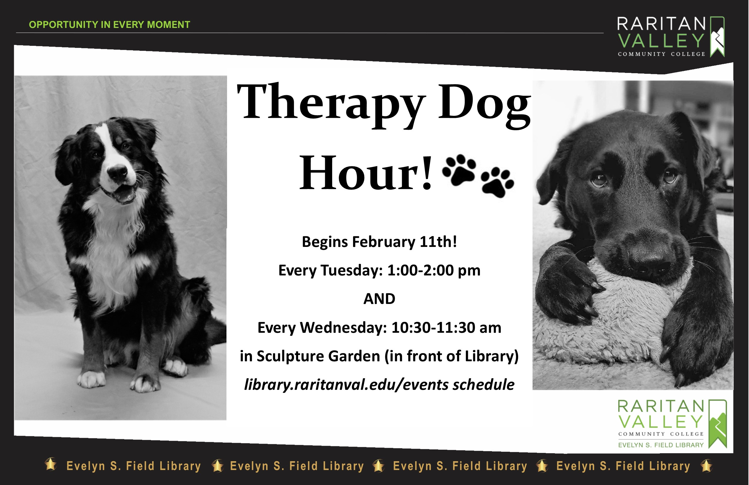 therapy dogs spring 2020