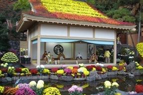 Kiku festival
