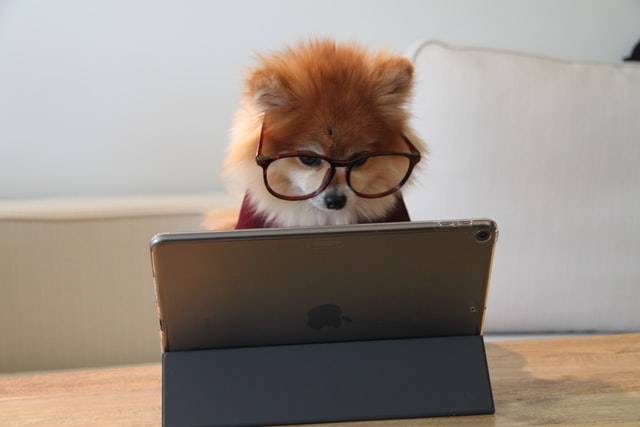 A dog in glasses is reading online content