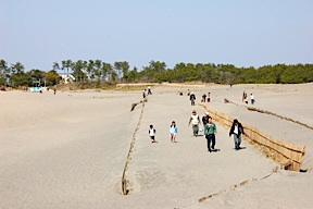 Families visiting the Nakatajima Sand Dunes, just east of Hamamatsu