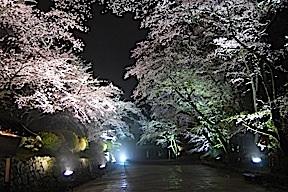 Miidera temple trees