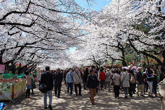 ueno park crowd