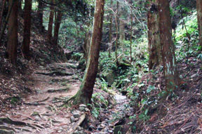 miwa trail