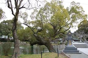 Hetsugu Munakata tree