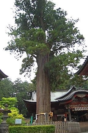 Fujiyoshida shrine