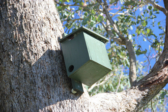 Sugar glider nestbox in tree, Victoria