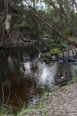 Represenative stream habitat of the platypus