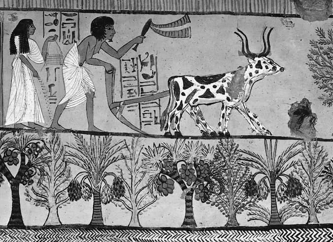 Plowing and sowing in Thebes. Painting from Tomb