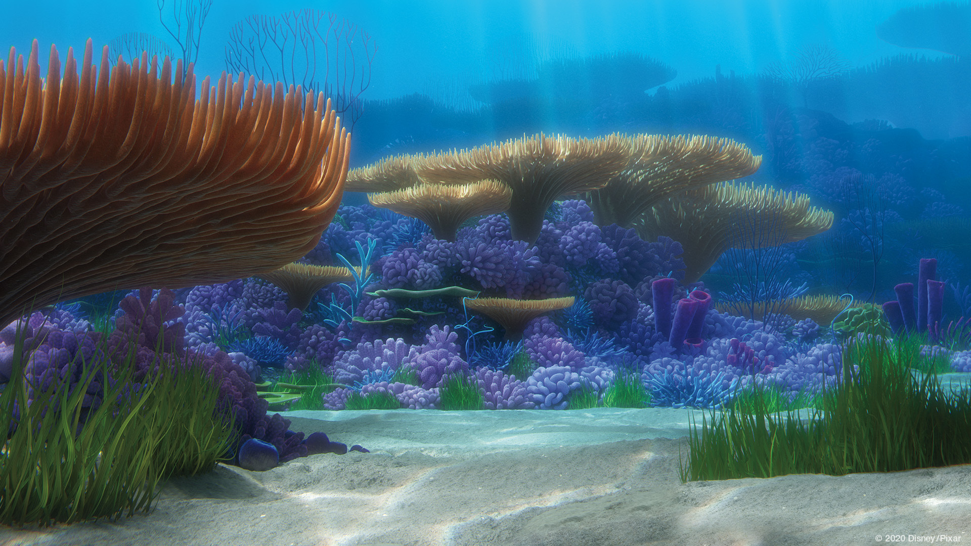 Zoom Background Finding Nemo