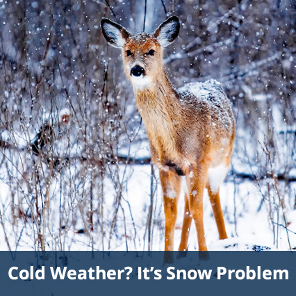 Cold Weather? It's Snow Problem