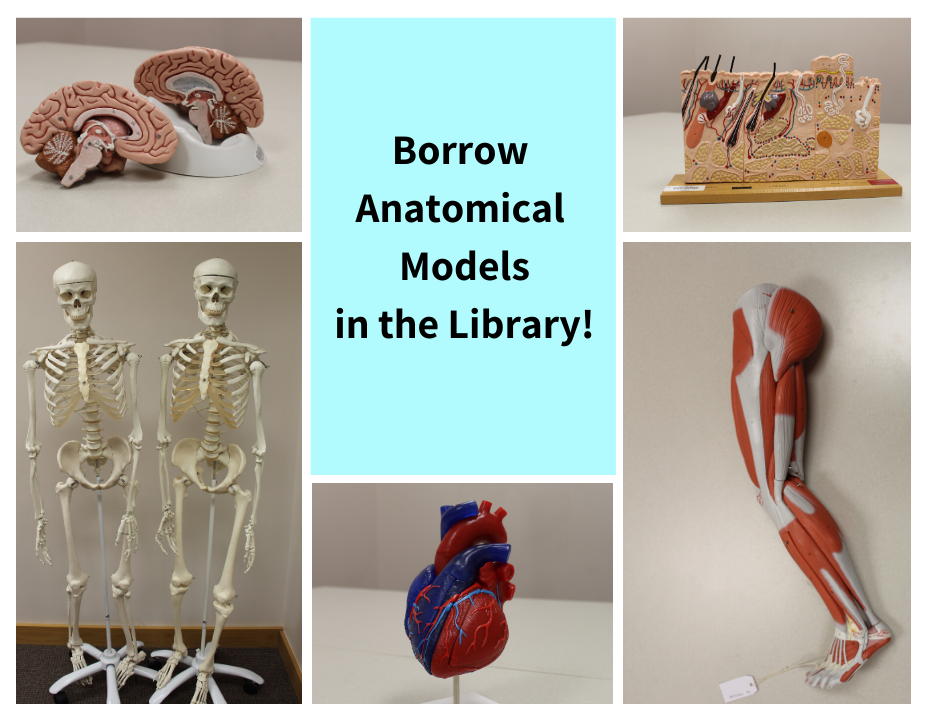 Borrow anatomical models from the library including brain, heart, skeleton, leg muscles, and skin.