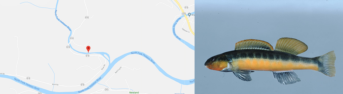 map and fish