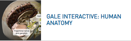 Gale Interactive: Human Anatomy logo
