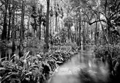 Loxahatchee River #2